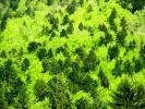 Forêts de Chartreuse (La Chartreuse)