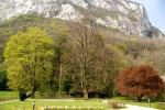 Les grands arbres (Jardin Notre-Dame)