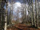 Bois de l'Allier (Pas de l'Allier)