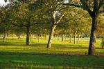 Derniers rayons dans un champ de noyers (Vinay - Pays de la noix)