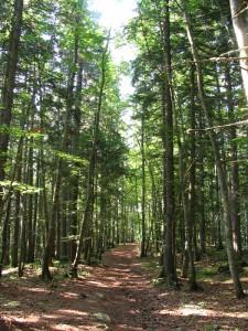Forêt de feuillus aux Grabieux