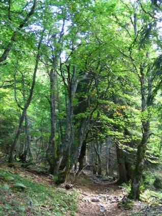 Chemin - Vers Malatra