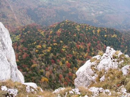 Forêt d'automne depuis le Pas de l'Eyrard