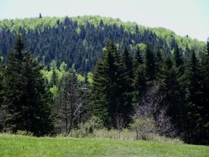 Prairie de la Lunette