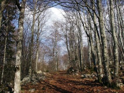 Bois de l'Allier