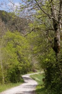 Chemin après Richardière