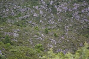 Garrigue et collines