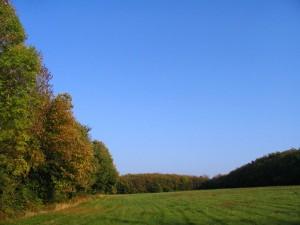Pré bordé d'arbres
