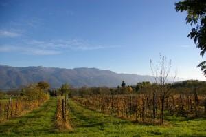 Rangs de vigne