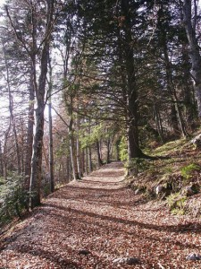 Chemin de l'Aulp du Seuil