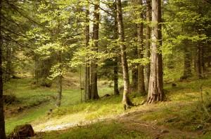 En forêt - Les Riondettes