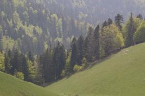 Forêt évanescente