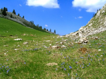 Quartiers de Dame marmotte - Col de Bovinant