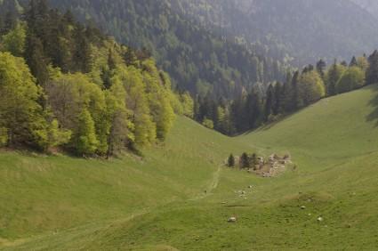 Ruines au fond du vallon