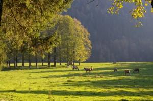 Soleil d'automne à la Correrie