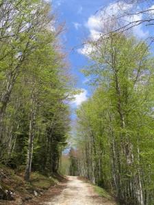 Vers le Col du Mollard