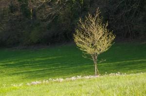 Arbre et fleurs dans un champ