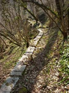 Canal en forêt