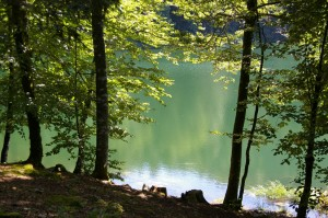 Transparences - Lac de Bonlieu