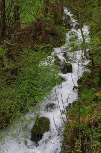 Ruisseau affluent du Borne - L'Overan (?)