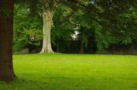 Pelouses - Parc du château