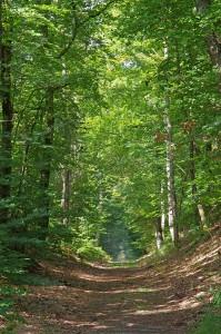 Chemin en forêt de Fontainebleau