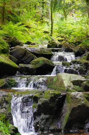 Ruisseau - Tendon