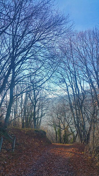 Automne au bois du Blanc