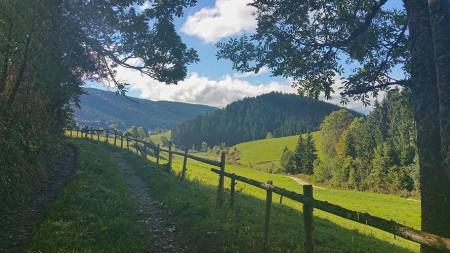 Méaudre - Bois de Claret